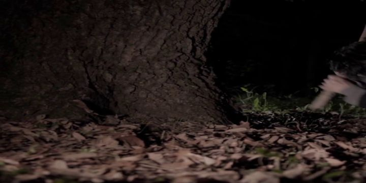木の根もと